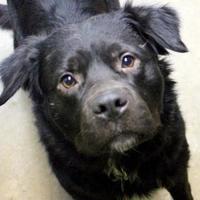 Adopt A Pet :: Scruffy - Shohola, PA