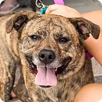 Adopt A Pet :: Magic - Richmond, VA