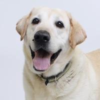 Adopt A Pet :: Barclay - Richmond, VA
