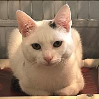 Adopt A Pet :: Eustice - Lafayette, NJ