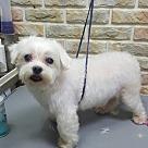 Adopt A Pet :: Yuki