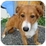 Photo 1 - Border Collie Mix Puppy for adoption in Guaynabo, Puerto Rico - Pookie