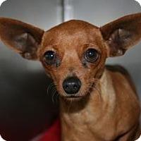 Adopt A Pet :: Sparkle - Canoga Park, CA
