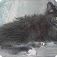 Adopt A Pet :: Theodore - Jacksonville, FL
