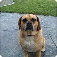 Adopt A Pet :: Boston - Riverside, CA