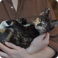 Adopt A Pet :: Bubi - Brooklyn, NY