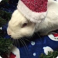 Adopt A Pet :: Jane - Williston, FL