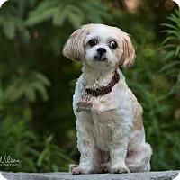 Adopt A Pet :: Duchess - Drumbo, ON