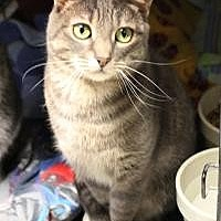 Adopt A Pet :: Tall Tail - Yukon, OK