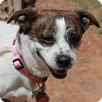 Adopt A Pet :: Freckle Face - Yukon, OK
