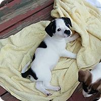 Adopt A Pet :: Rowlf - Duluth, GA