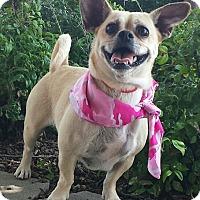 Adopt A Pet :: Tootsie - Terrell, TX
