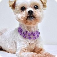 Adopt A Pet :: Mitzy - Dublin, CA
