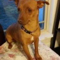 Adopt A Pet :: Mayzee - Amarillo, TX