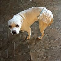 Adopt A Pet :: Tiara # 740 - Nixa, MO