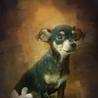 Adopt A Pet :: Marshall - Dalton, GA