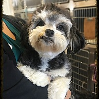 Adopt A Pet :: Peanut 2 - Los Alamitos, CA