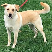 Adopt A Pet :: Riley - Palo Alto, CA