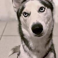 Adopt A Pet :: Bella - Jupiter, FL