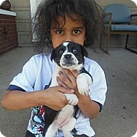 Adopt A Pet :: Chummy - Cincinnati, OH