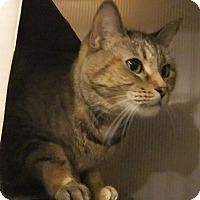 Adopt A Pet :: Shundra - Edmonton, AB