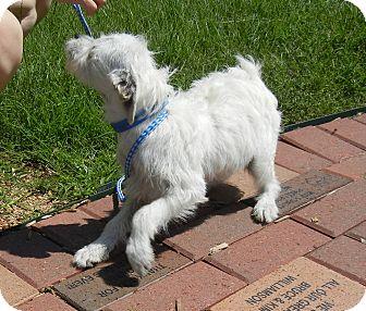 Terrier (Unknown Type, Medium) Mix Dog for adoption in Houston, Texas - Bane