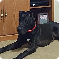 Adopt A Pet :: James Bond - St. Louis, MO
