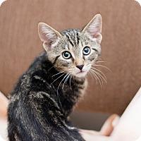 Adopt A Pet :: Daniel - Fountain Hills, AZ