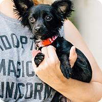 Adopt A Pet :: Hyacinth - Los Angeles, CA