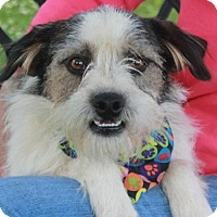 Adopt A Pet :: Rascal-PENDING - Garfield Heights, OH
