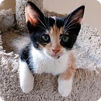 Adopt A Pet :: Callie/NB - White Bluff, TN