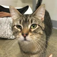 Adopt A Pet :: Friday - Fort Dodge, IA