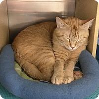 Adopt A Pet :: Spicer - Arlington/Ft Worth, TX