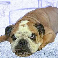 Adopt A Pet :: Lou URGENT - Sacramento, CA