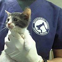 Adopt A Pet :: A291364 - Conroe, TX