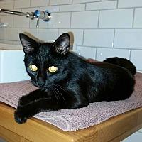 Adopt A Pet :: Noir - McCormick, SC