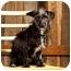 Photo 3 - Cairn Terrier Mix Dog for adoption in Portland, Oregon - Benjamin