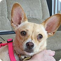 Adopt A Pet :: Chloe - Schenectady, NY