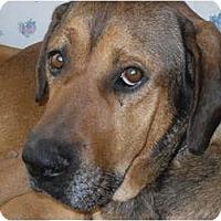 Adopt A Pet :: Ted - Newport, VT