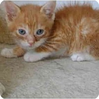 Adopt A Pet :: Baby boy - Etobicoke, ON