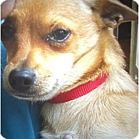 Adopt A Pet :: Tyson - Afton, TN