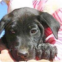 Adopt A Pet :: Nancy - Westbrook, CT