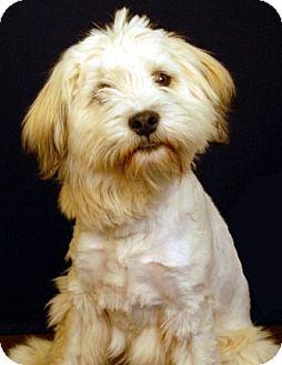 Terrier (Unknown Type, Medium) Mix Dog for adoption in Newland, North Carolina - Heidi