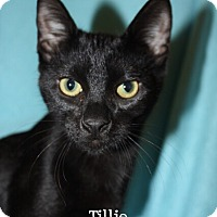 Adopt A Pet :: Tillie - Foothill Ranch, CA