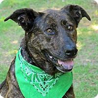 Adopt A Pet :: Moca - Raleigh, NC