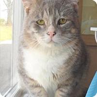 Adopt A Pet :: Severide - Waupaca, WI