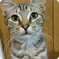 Adopt A Pet :: Alexander - Morganton, NC