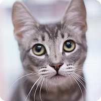 Adopt A Pet :: DANA - Pt. Richmond, CA
