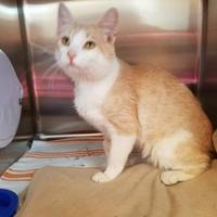 Adopt A Pet :: O'Flarety - Fergus Falls, MN