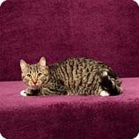Adopt A Pet :: Chibs (full sponsorship for Chibs & a buddy paid) - Cary, NC